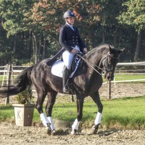 trainen-van-paarden02